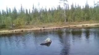 Первые купания моего щенка метис РОС!