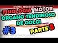 Video de Fisiologia Sistema motor - Organo tendinoso de golgi - Reflejo Flexor y retirada