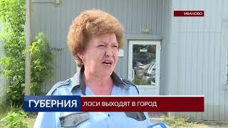 2019 06 10 ВИДЕО ЛОСИ ВЫХОДЯТ В ГОРОД