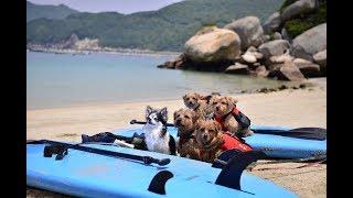 高知県大月町柏島。素晴らしい海でワンコと一緒に遊べるなんて!