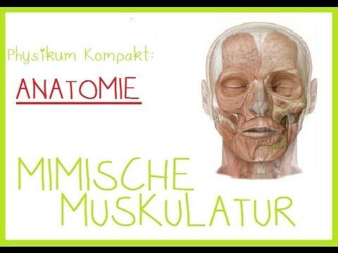 Anatomie - 1.MIMISCHE MUSKULATUR - YouTube