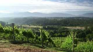 En el viñedo de Fillaboa - Todovino.com