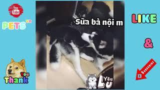 Vietsub -Những Clip Vui Nhộn Hài Hước Về Chó Mèo