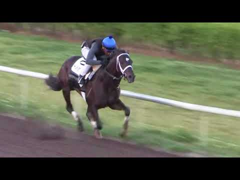2018 Kentucky Derby winner Always Dreaming works at Palm Beach Downs ahead of the 2018 Hardacre Mile