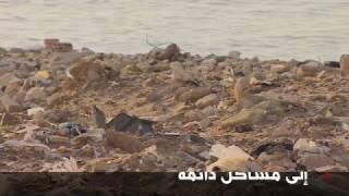 بالفيديو.. طيور النورس كارثة تهدد سلامة الطيران في بيروت