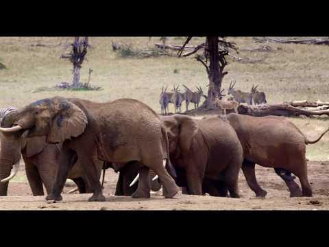How Many Elephants Exist in Tsavo? An Elephant Census