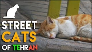 4 Minutes of Street Cats in Tehran