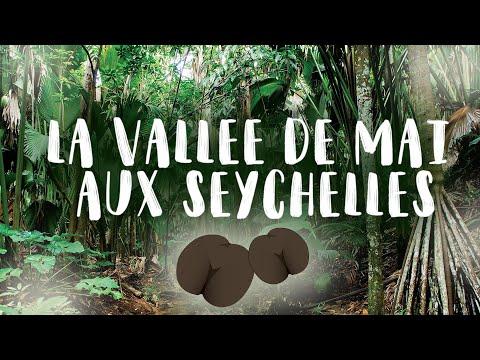 La Vallée de Mai aux Seychelles avec Exotismes