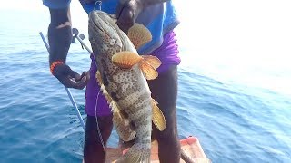 GOLIATH GROUPER / PARROT FISH CATCHING AT OFFSHORE