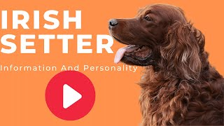 All Dogs Breeds - Irish Setter Dog Breed Information And Personality