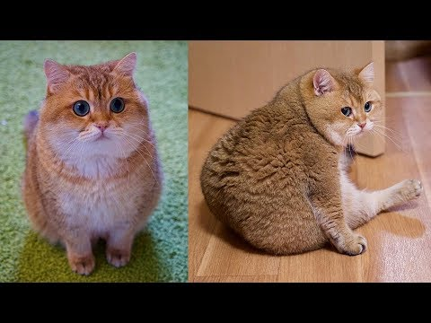 Garfield, Is That You?