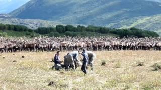 Reindeer herders of Kamchatka