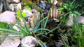 Fish Pond With Diy Filtration