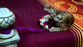 Oscar playing with his toy bear