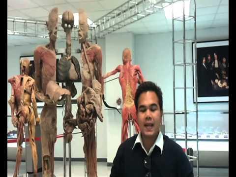 พิพิทธภัณร่างกายมนุษย์