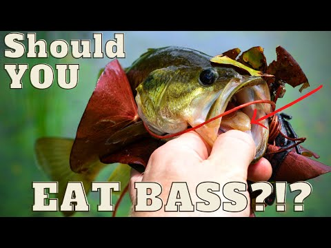 Should You Eat Bass?!? + Catch And Cook - Largemouth Bass