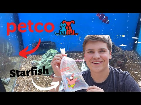 BUYING A PET STARFISH