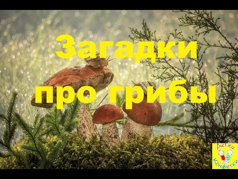 Загадки про грибы. Красивые картинки с озвучкой и ответами.