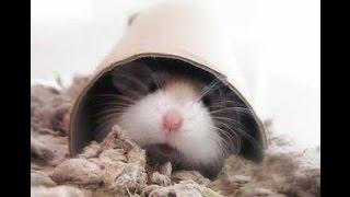 Como jugar con tu hamster