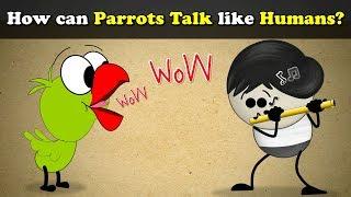 How can Parrots Talk like Humans?   #aumsum