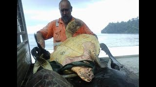 Kind Man Buys Turtles From Food Market And Takes Them Straight To The Sea