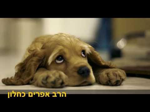 כלבים בוכים הרב אפרים כחלון