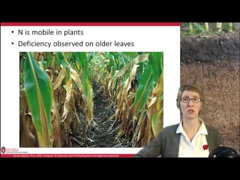 Introduction to Nitrogen Management, part 1/4
