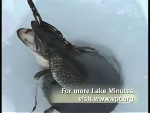 Ice fishing on lake champlain youtube for Lake champlain fishing report
