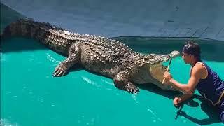 Шоу крокодилов в Камбодже