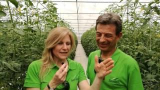 Video Seminis - Monsanto Acate 25 maggio 2017 FP download MP3, 3GP, MP4, WEBM, AVI, FLV September 2017