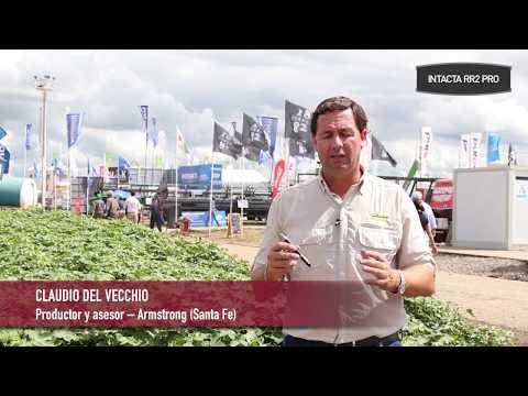Claudio Del Vecchio: ¿Que plagas hubo en su zona y cómo se comportaron las sojas INTACTA?