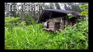 Russian Log Cabin (20 Years Old)
