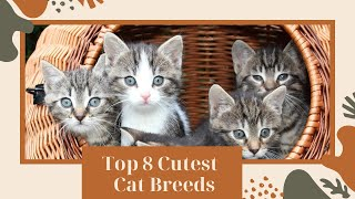 Top 8 Cutest Cat Breeds In The World