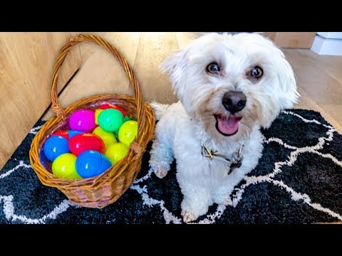 PUPPY GOES ON EASTER EGG HUNT! 🌺