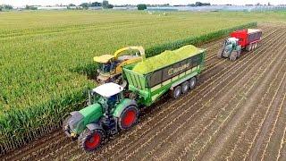 Maize Silage Race 2016 | NH FR9050 - Krone ZX560 - JD 7280R - FENDT 939/936 | Immink Aalsmeer