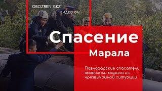 Павлодарские спасатели вызволили марала из чрезвычайной ситуации