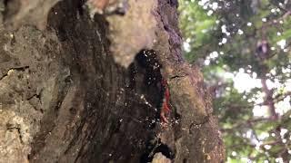 三重県上野市の山中で雰囲気の良いクヌギ林を発見!早速、探索するも・...