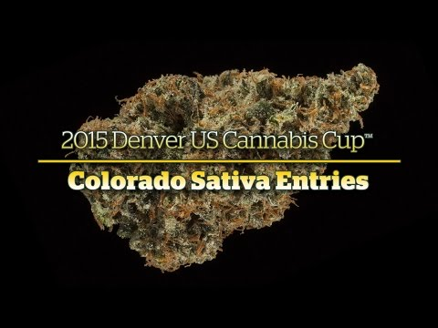 2015 Denver Cannabis Cup: Colorado Sativa Entries