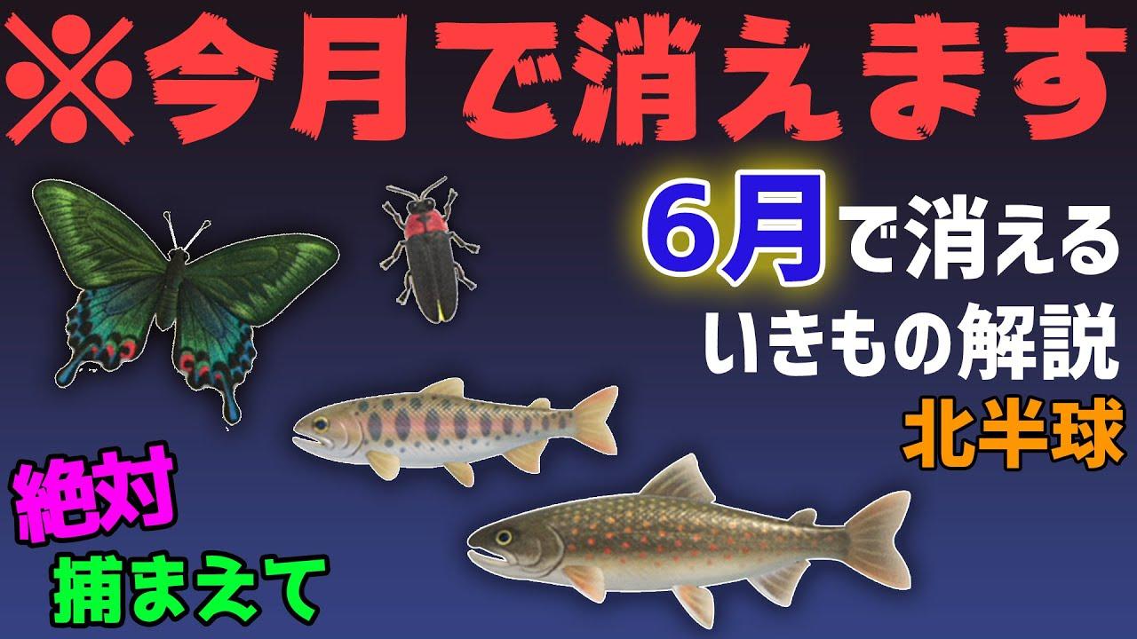 あつ森 魚 6月
