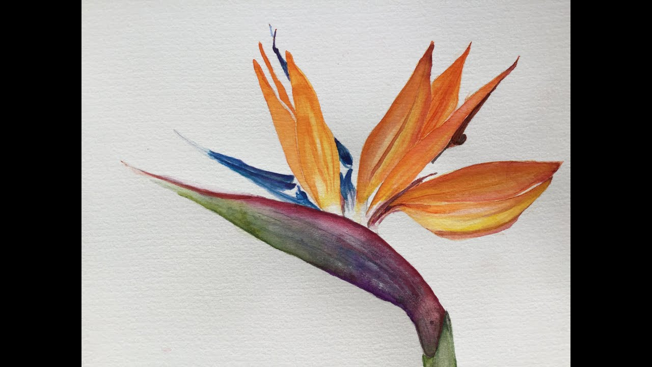 How To Paint A Birds Of Paradise Vintage Arts By Fiurza