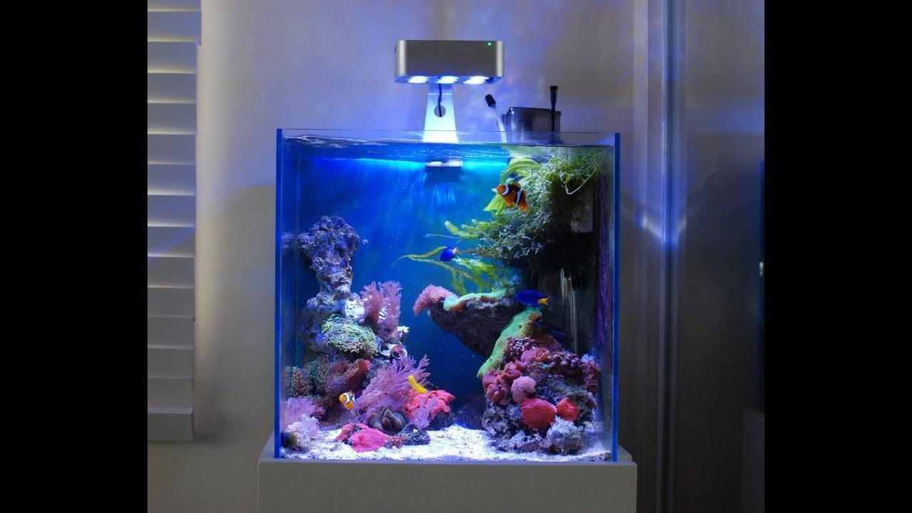 Aquascape Nano Mixed Soft Coral Reef Salt Tank