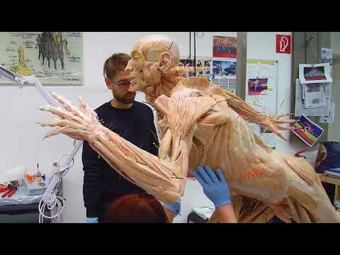 BODY WORLDS & The Art of Plastination (English/Français)