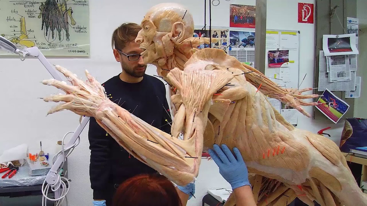 BODY WORLDS & The Art of Plastination (English/Français) - YouTube