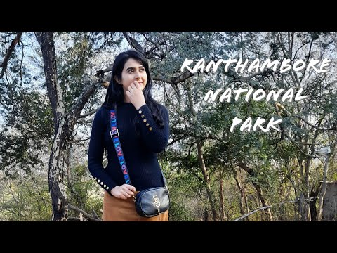 A Day In Ranthambore National Park | Best Zone To Spot The Tigers | Travel  VLOG