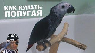 Как купать попугая Жако / Parrot Shower