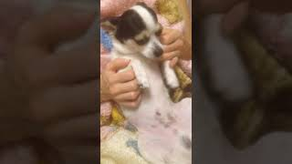Как усыпить собаку/ усыпление за 1 минуту•