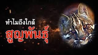 รายการ สิงสา..ตอน แมวใหญ่ใกล้เมือง : Matichon TV