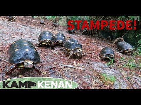 Feeding Tortoises after the Rain