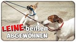 Hund beißt, zieht und zerrt an der Leine! Nach Leine schnappen abgewöhnen! Tipps!