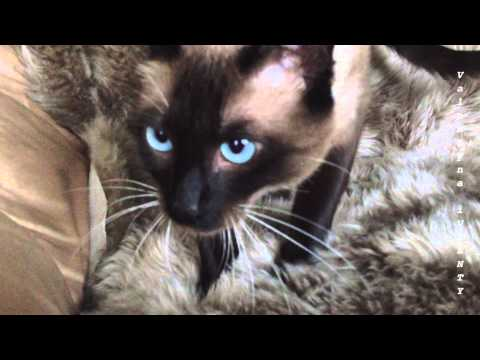 Вопрос: Почему коты так любят мять пледы лапами?